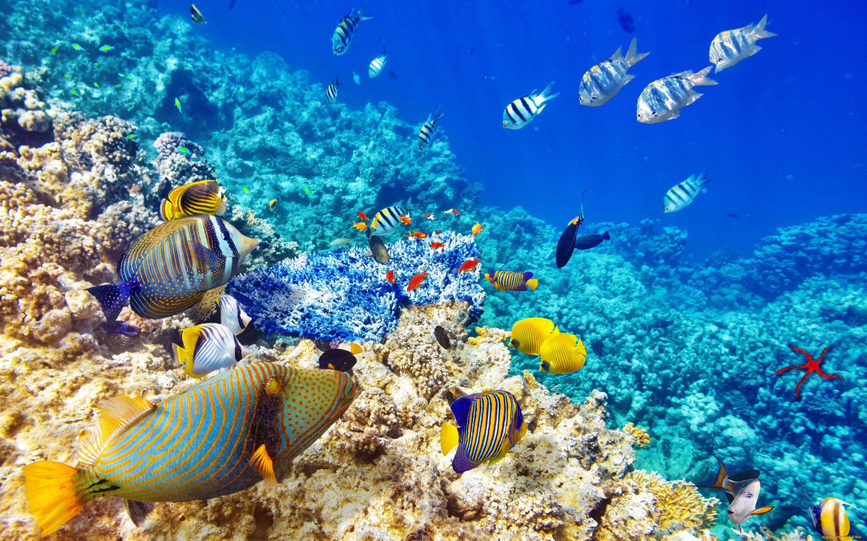 словам картинки дна океана с рыбками фотокниг заказ томске